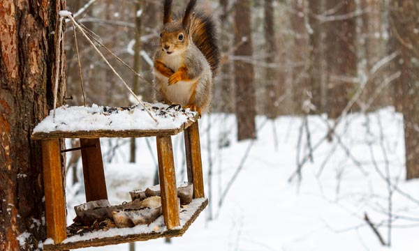 Benefit-of-Squirrel-Feeder