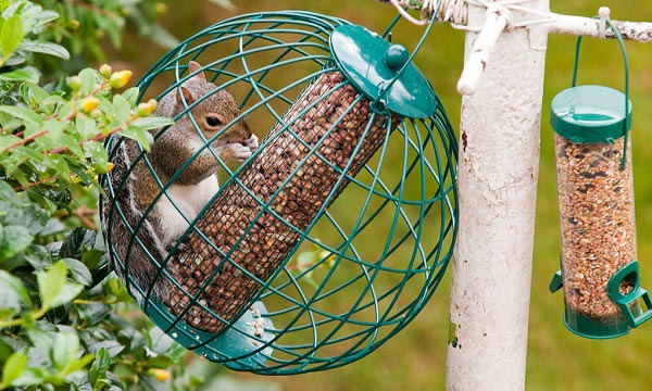 Benefit-of-Squirrel-Proof-Feeder
