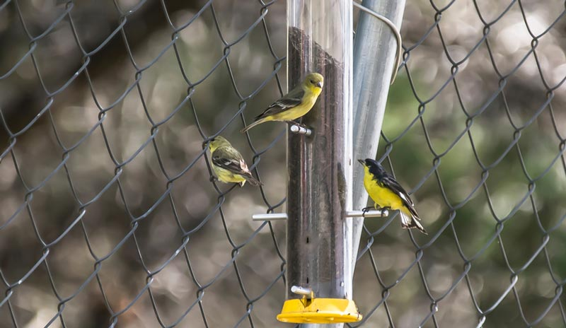 Best Finch Feeders