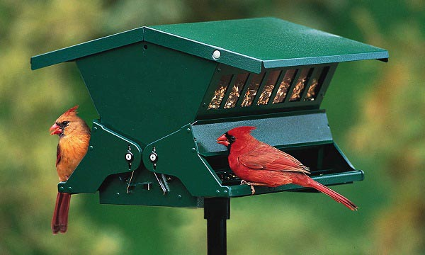 Best-Squirrel-Proof-Bird-Feeder
