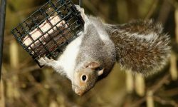 Best Squirrel Proof Feeder