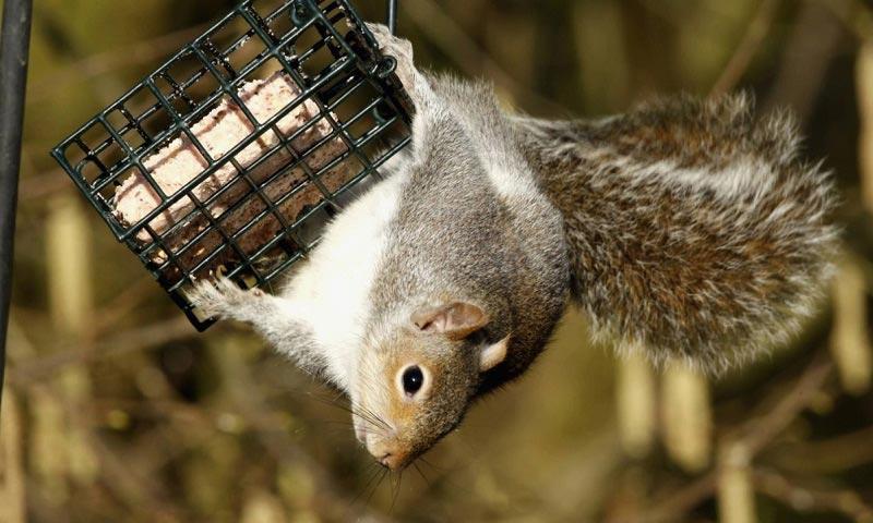 Best Squirrel Proof Feeder