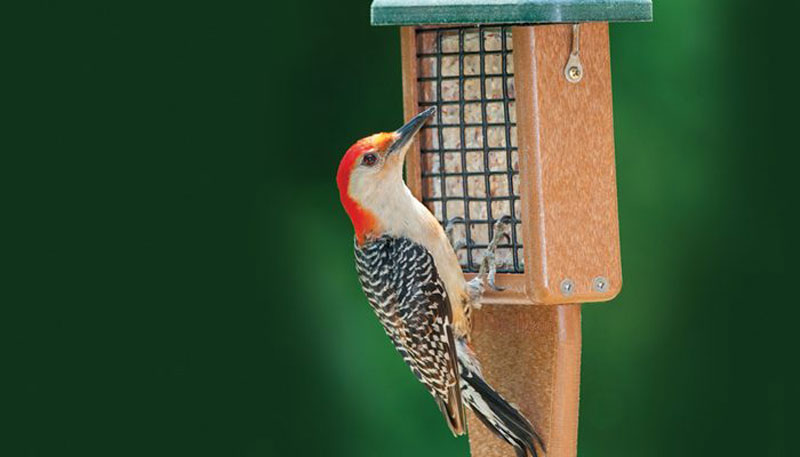 Kettle Moraine Window Mount Single Suet Cake Woodpecker Bird Feeder