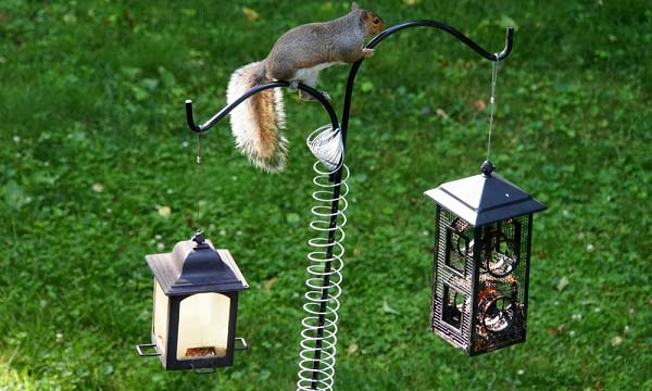 Bird Feeder Pole Reviews