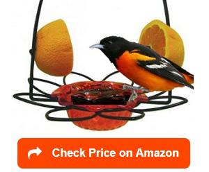 Nature Products Birds Choice 1009 Oriole-Fest Feeder 12-Ounce Orange