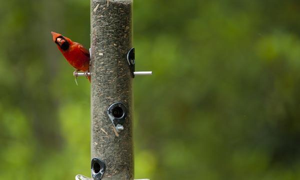 Feeder-for-Cardinals-Reviews
