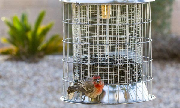 How-does-Squirrel-Proof-Feeder-work