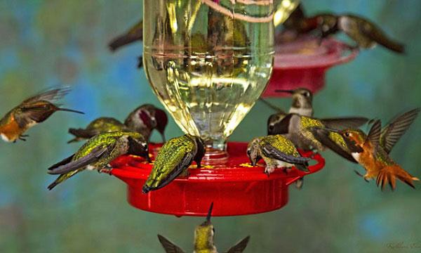 How-does-hummingbird-feeder-work
