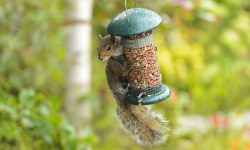 How to Stop Squirrels from Eating Bird Food