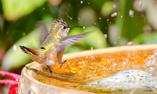 Placing-a-Bird-Bath