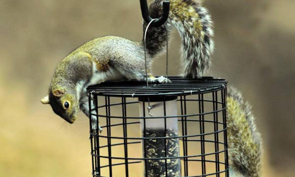 Squirrel-Proof-Feeder-FAQs