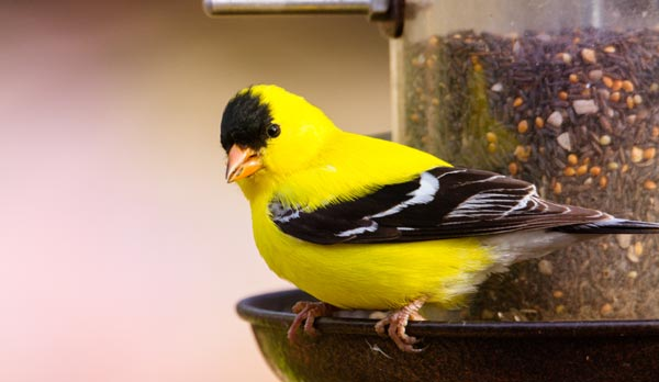 Types-of-finch-feeders