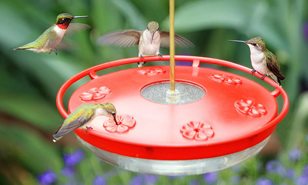 Types-of-hummingbird-feeders