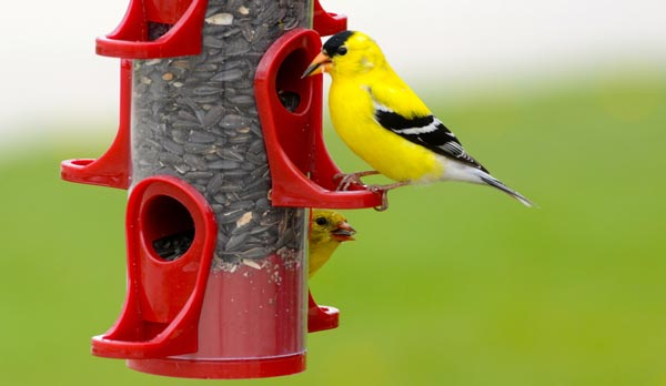 What-is-a-finch-feeder
