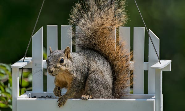 What-is-an-Squirrel-Feeder