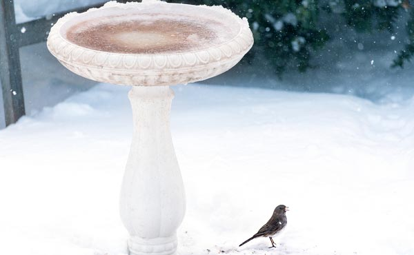 Where-to-Place-a-Bird-Bath-in-the-winter