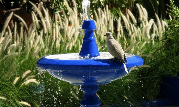 Where-to-Put-a-Bird-Bath