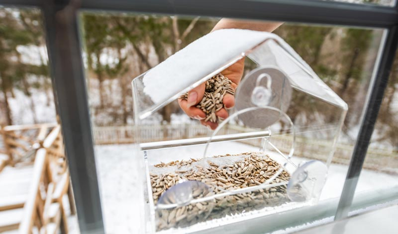 9 Best Window Bird Feeder Reviews 2019 Buying Guide Faqs