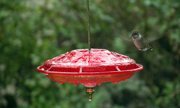 what-is-a-hummingbird-feeder