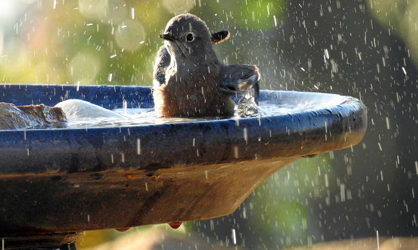 all-seasons-heated-bird-bath