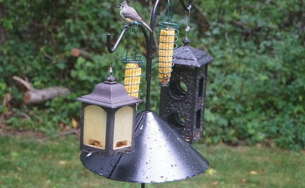 audubon-squirrel-baffle-instructions