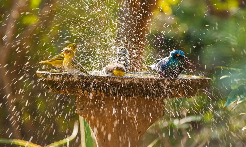 best bird bath