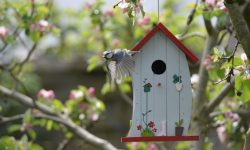 best bird houses