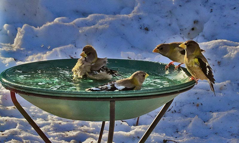 best heated bird bath