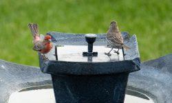 best solar birdbath fountain
