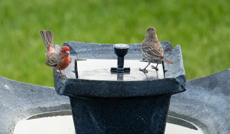 best solar birdbath fountain