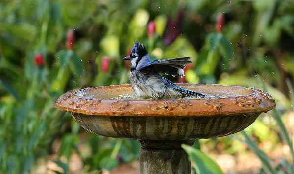 ceramic-bird-baths