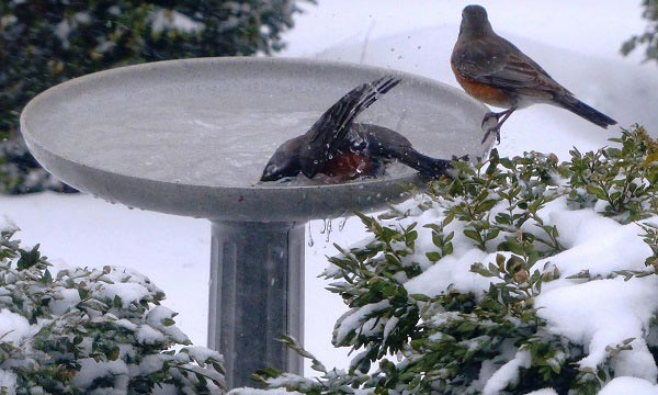 heated-bird-bath-with-stand
