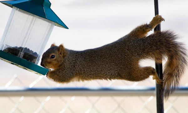 homemade-squirrel-baffle