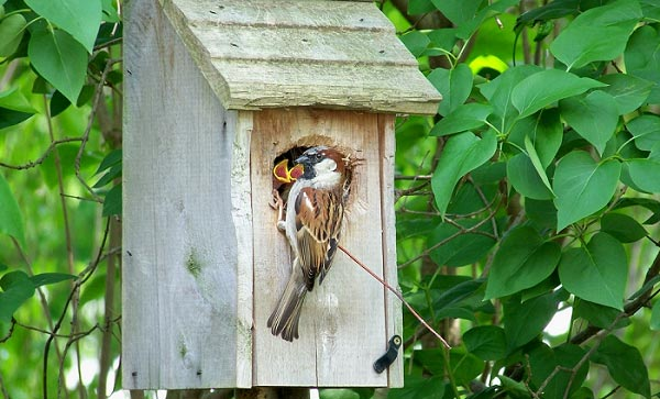 quality-bird-house