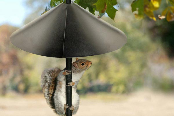 squirrel-baffles-for-hanging-bird-feeders
