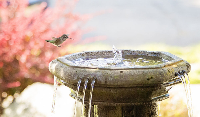 hummingbird landing on garden fountain