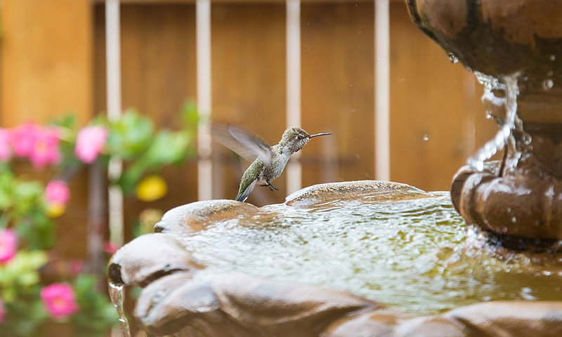 hummingbird perching on bird bath
