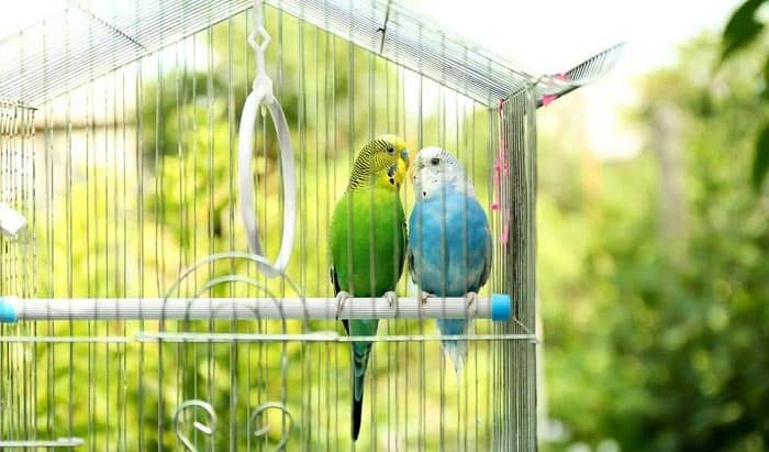 best bird cages for parakeets