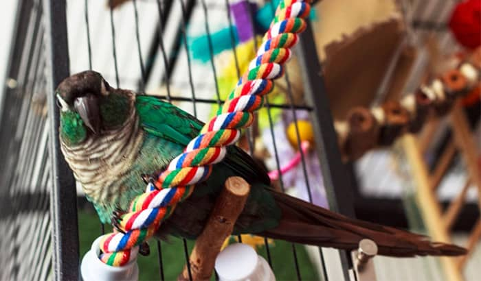 best bird toys for conures