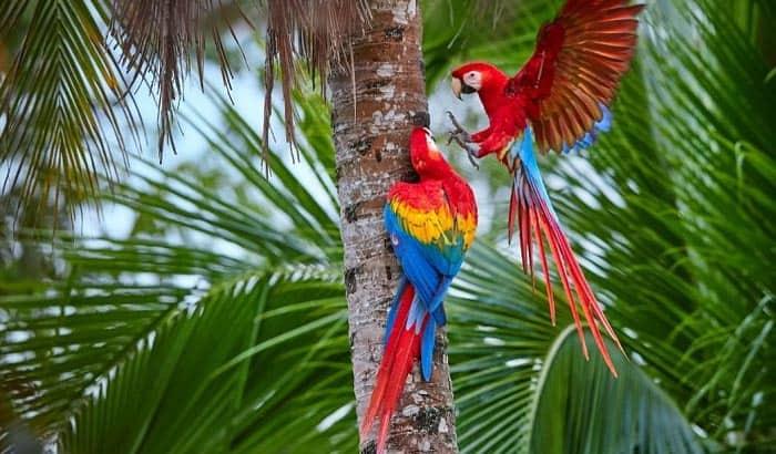 best-large-parrot-cage