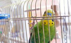 best parakeet cage