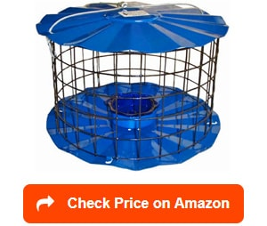 Bluebird-Feeder-Includes-Meal-Worm-Cup