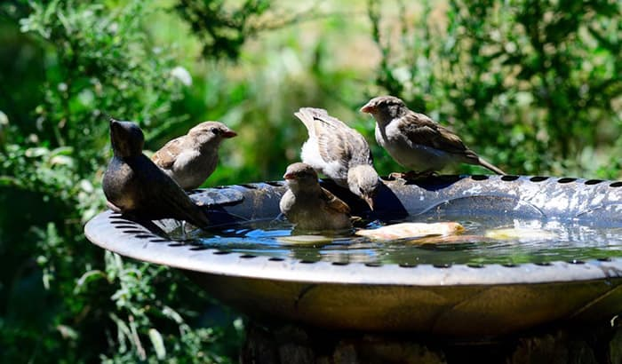 attracting birds to bird baths