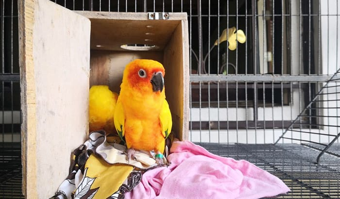 best bedding for bird cages