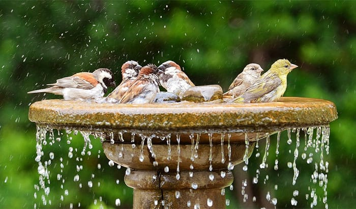 best bird baths attracting birds