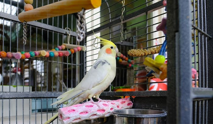 best bird cages for cockatiels