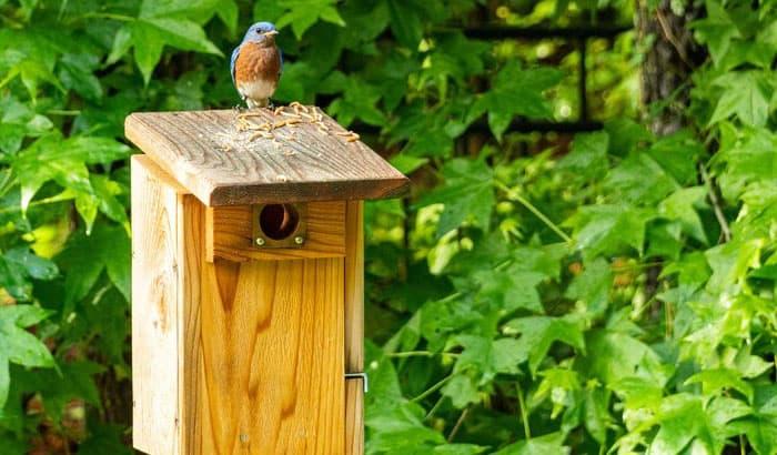 best-bluebird-house-design