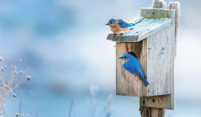 best bluebird houses