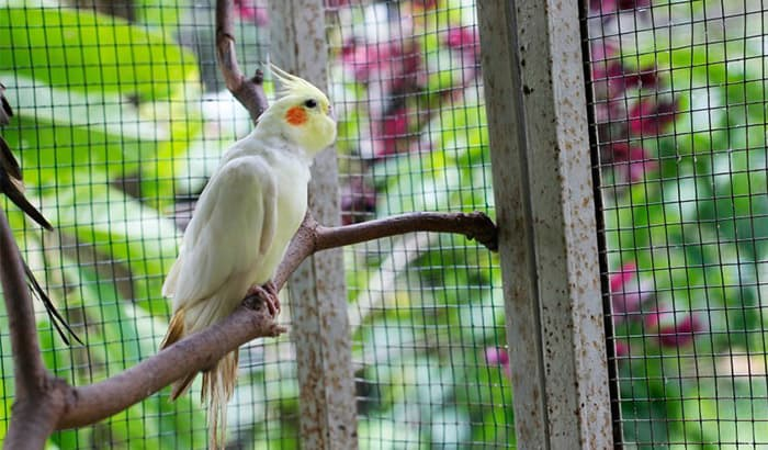 best size cage for cockatiel