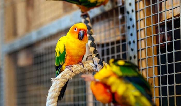 bird cages for sun conures